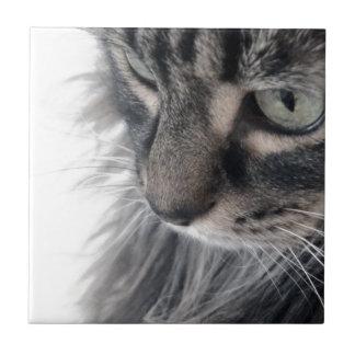 Aux yeux d'un animal petit carreau carré