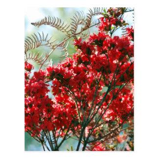 Azalées rouges et signification carte postale