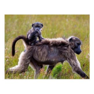 Babouins sauvages de mère et de bébé, Afrique du Carte Postale