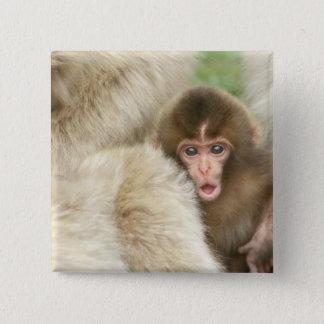 Badge Carré 5 Cm Bébé de singe de neige, Jigokudani, Nagano, Japon