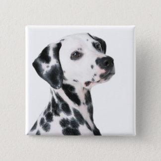 Badge Carré 5 Cm Belle photo de chien dalmatien, cadeau