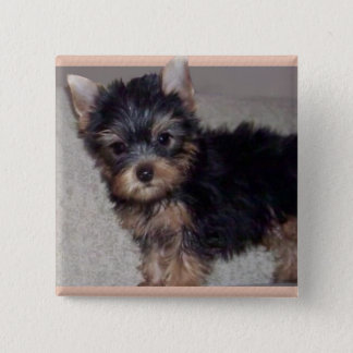 Badge Carré 5 Cm Bouton de chiot de Yorkshire Terrier