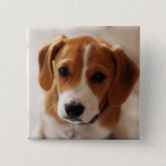 Badge Carré 5 Cm Chiot 2 de beagle