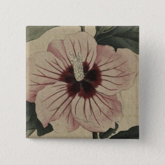 Badge Carré 5 Cm curtis-botanical-v3-1792_plate83_SyrianHibiscus.jp