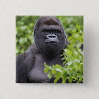 Badge Carré 5 Cm Gorille de plaine de Silverback, gorille de