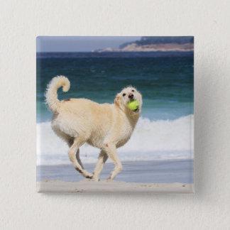 Badge Carré 5 Cm Labradoodle - jour heureux sur la plage