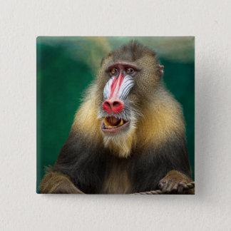 Badge Carré 5 Cm Photographie de primat