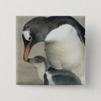 Badge Carré 5 Cm Pingouin de Gentoo, (Pygoscelis Papouasie), adulte