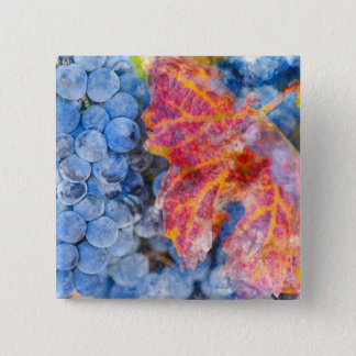 Badge Carré 5 Cm Raisins sur la vigne pendant la saison d'automne
