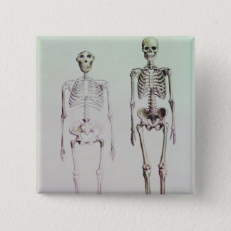 Badge Carré 5 Cm Squelettes des australopithèques Boisei