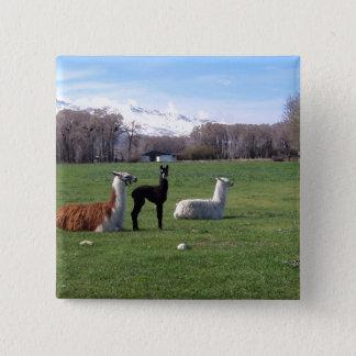Badge Carré 5 Cm Trois lamas dans le domaine