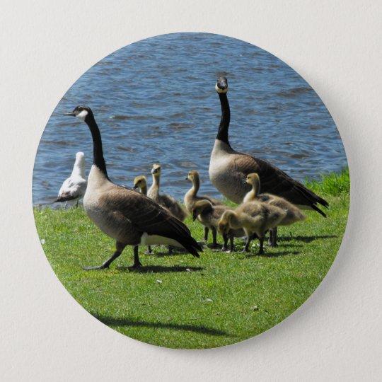 Badge Rond 10 Cm Oies du Canada sur l'herbe par le bouton de l'eau