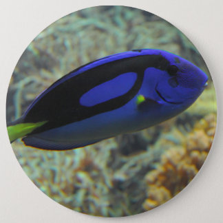 Badge Rond 15,2 Cm Hepatus de Paracanthurus