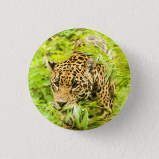 Badge Rond 2,50 Cm Guépard - bouton