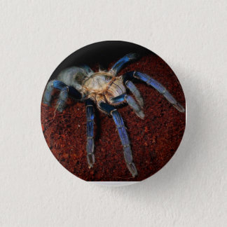 Badge Rond 2,50 Cm Insigne d'araignée