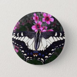 Badge Rond 5 Cm Bouton de papillon de machaon d'anis