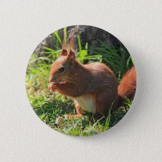 Badge Rond 5 Cm Bouton rouge de photo d'écureuil beau, goupille
