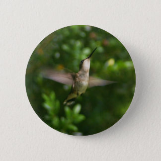 Badge Rond 5 Cm Bouton rouge femelle de colibri de gorge