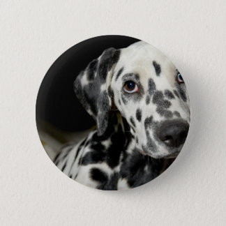 Badge Rond 5 Cm Dalmate dog, pretty lookking