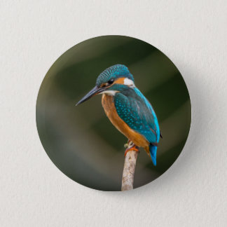 Badge Rond 5 Cm Martin-pêcheur