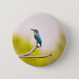 Badge Rond 5 Cm Nature de martin-pêcheur
