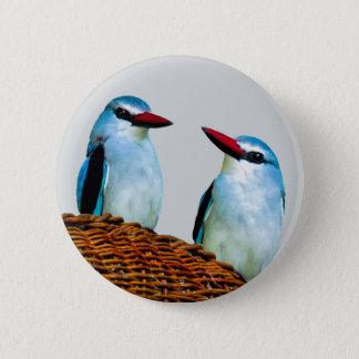 Badge Rond 5 Cm Oiseaux Afrique du Sud de martin-pêcheur