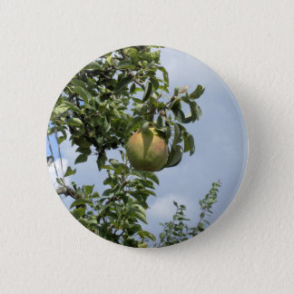 Badge Rond 5 Cm Poires sur des branches d'arbre