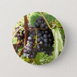 Badge Rond 5 Cm Raisins rouges dans un vignoble