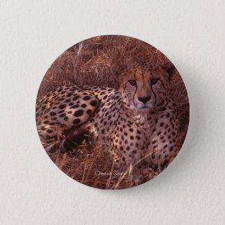 Badge Rond 5 Cm Regard fixe de guépard