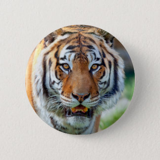 Badge Rond 5 Cm Tigre ButtonLife