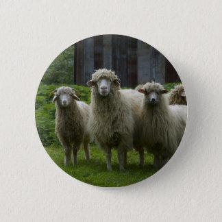 Badge Rond 5 Cm Troupeau frais des terres cultivables des moutons