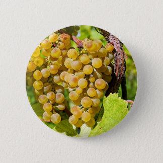 Badge Rond 5 Cm Vigne saine de raisins de table d'or de fruit de