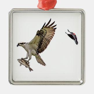 Balbuzard chassé par un merle à ailes rouges ornement carré argenté