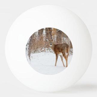 Balle De Ping Pong Cerfs communs de mâle de bouton dans le domaine