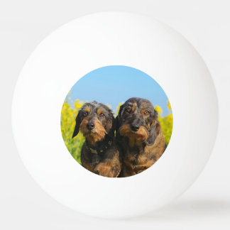 Balle De Ping Pong Photo mignonne de portrait de Dackel de deux