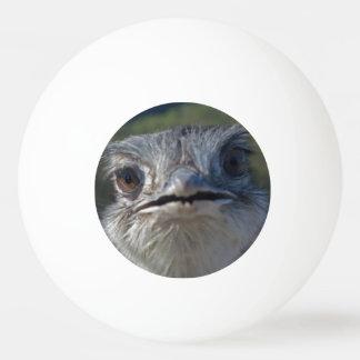 Balle Tennis De Table Boule d'oiseau