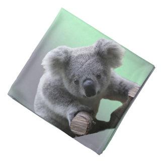 Bandana Ours de koala