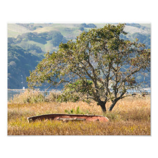 Bateau et photo d'arbre