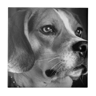 Beagle Carreau En Céramique
