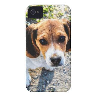 Beagle mignon coque iPhone 4