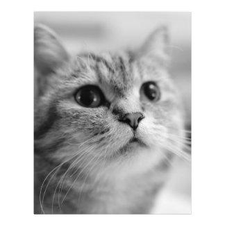 Beau chat d'animal familier prospectus 21,6 cm x 24,94 cm