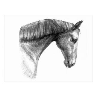 Beau cheval foncé vintage carte postale