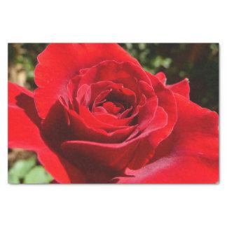 Beau floral de fleur lumineuse de rose rouge papier mousseline