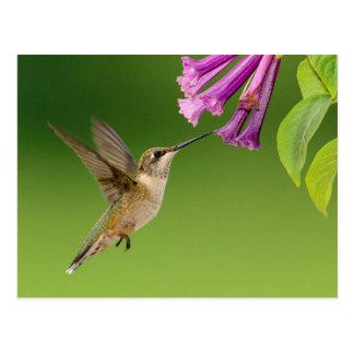 Beau paysage de nature de colibri carte postale