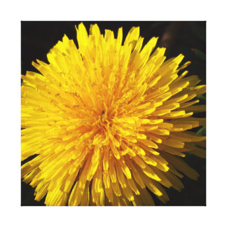 Beau pissenlit jaune toile