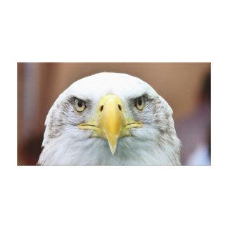 Beau portrait d'aigle toile