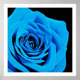 Beau rose de bleu poster