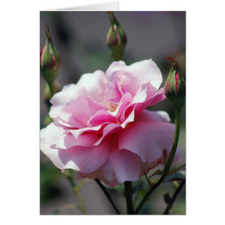 Beau rose et signification de rose carte