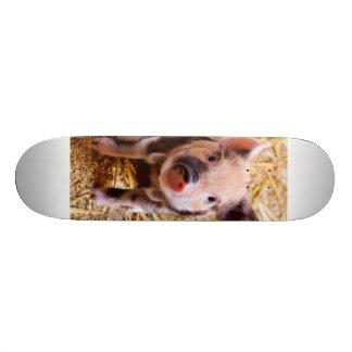 Bébés mignons d'animaux de ferme de porcelet de planches à roulettes