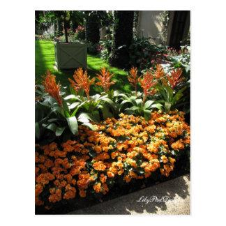 Bégonias oranges floraux de carte postale